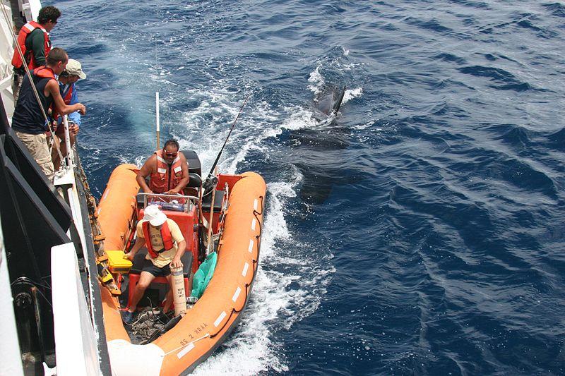 File:Anim1039 - Flickr - NOAA Photo Library.jpg