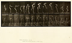 Animal locomotion. Plate 166 (Boston Public Library).jpg