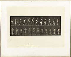 Animal locomotion. Plate 180 (Boston Public Library).jpg