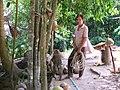 Ape collecting coconut - vycvičená opice trhá kokosy - panoramio.jpg