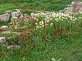 Aptera - Blumen und Ruinen 1.jpg
