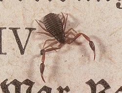 meaning of arachnid