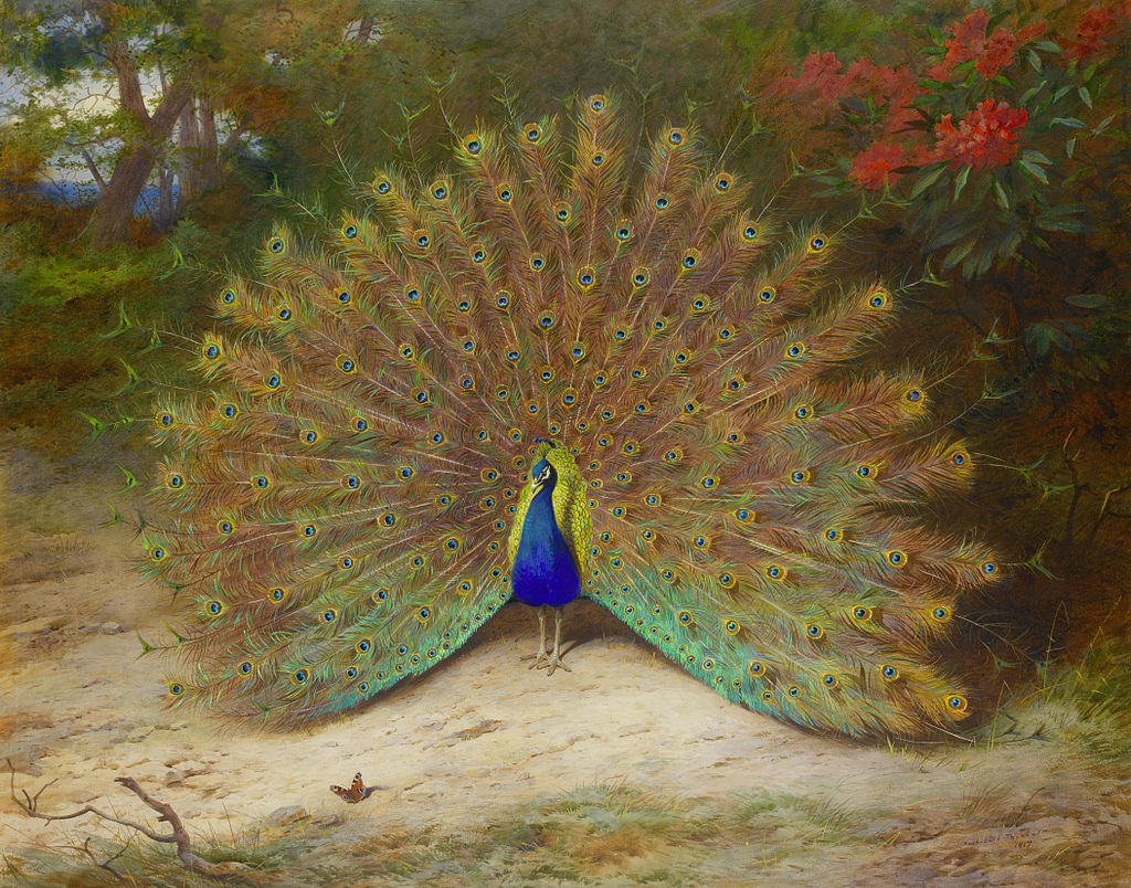 Арчибальд Торберн, Павлин и Павлинья бабочка, 87,5 x 111,5 см.  Bonhams..jpg