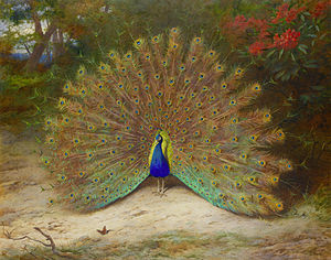 Archibald Thorburn - Peacock and Peacock Butterfly by Archibald Thorburn