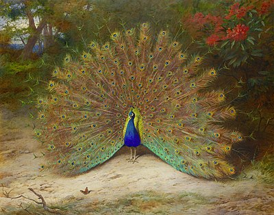 Archibald Thorburn, Peacock and Peacock Butterfly, At 87.5 x 111.5cm. Bonhams.