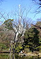 Arisugawa-no-miya Memorial Park - DSC06931.JPG