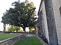 Artziniegako artea (Quercus ilex), Euskadiko aparteko zuhaitza izendatu zuten 1995. urtean maiatzaren 16ko 265 1995 Dekretuaren bitartez.jpg