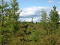 Asinovsky District, Tomsk Oblast, Russia - panoramio (116).jpg