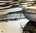 Aswan 3.jpg