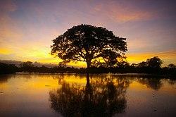 Atardecer en la amazonia (Dpto. del Beni)