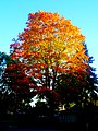Autumn Colors in Madison - panoramio (3).jpg