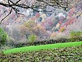 Autumn colours in the Wye Gorge, November 2013 - panoramio.jpg