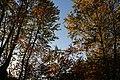 Autumn trees in Poland.jpg