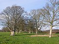 Avenue of Trees at Ilsington, Dorset - geograph.org.uk - 645782.jpg
