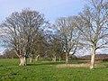 Avenue of Trees at Ilsington, Dorset - geograph.org.uk - 645782.jpg