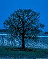Bäume sind Gedichte, die die Erde in den Himmel schreibt. Wir fällen sie und verwandeln sie in Papier, um unsere Leere darauf auszudrücken (Khalil Gibran) (12409291354).jpg