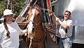 Back Country Horsemen readying Horse for Pine Lake, Wallowa-Whitman National Forest (26366412861).jpg