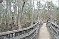 Bald Cypress Trail First Landing State Park-boardwalk-5 (33051845892).jpg