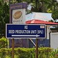 Balung Tawau Sabah Sawit-Kinabalu-Seeds-Sdn-Bhd-02.jpg