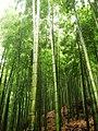 Bamboo sea (4411356292).jpg