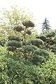 Bambouseraie de Prafrance 20100904 064.jpg