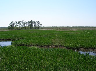 Jean Lafitte National Historical Park and Preserve - Barataria Preserve