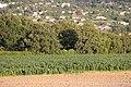 Bardonnex, Switzerland - panoramio (61).jpg