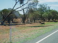 Barrier Highway. Broken Hill - Cobar. NSW.jpg