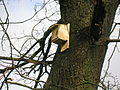 Bat box at Barrmill Park.JPG