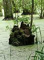 Baumreiche Moorlandschaft im Nationalpark Jasmund auf Rügen.JPG