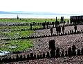 Beach at Lepe - geograph.org.uk - 1350926.jpg