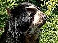 Bear (19643251).jpeg