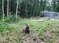 Bear Berna Dobrich.JPG