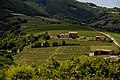 Beaujolais Wine country.jpg