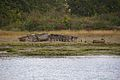 Beaulieu River views 6.jpg