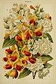 Beautiful flowering trees and shrubs for British and Irish gardens (1903) (20358811605).jpg
