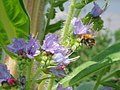 Bee Heaven! (2537927157).jpg