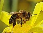 Bee March 2008-4.jpg