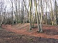 Beeches on Ambresbury Banks - geograph.org.uk - 110134.jpg