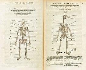 Buy Vertebrates  Comparative Anatomy  Function  Evolution Book Online at  Low Prices in India   Vertebrates  Comparative Anatomy  Function  Evolution  Reviews