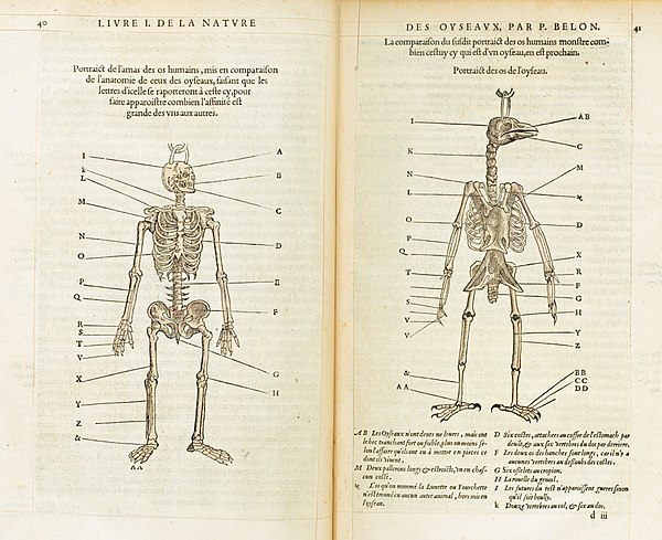 Anatomía comparada - Wikiwand