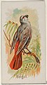 Bengali, from the Song Birds of the World series (N23) for Allen & Ginter Cigarettes MET DP835262.jpg