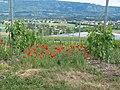 Bernex, Switzerland - panoramio (19).jpg