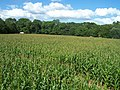 Bickleigh , The Maize Maze - geograph.org.uk - 1224836.jpg