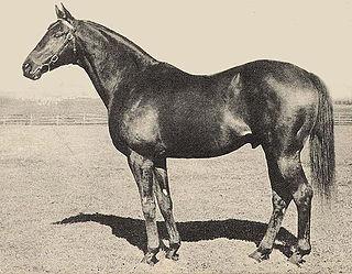 Bimelech American-bred Thoroughbred racehorse