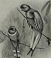Bird-lore (1914) (14755389565).jpg