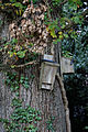 Bird boxes Nuthurst, West Sussex, England.jpg