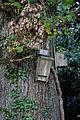 Bird boxes Nuthurst, West Sussex, England.jpg