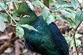 Birds of Eden-1655.jpg