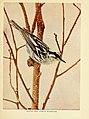 Birds of lakeside and prairie (6256988257).jpg